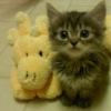 sebenikela: (pls? kitten)