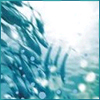 ingo: blue bubbles under the sea (the briny sea)
