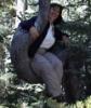 mlerules: (tree)