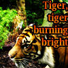 longlivehumour: Tyger, tyger, burning bright (Default)