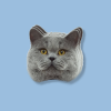 greatcalico: The cropped head of a british shorthair cat looking straight-on, placed with a shadow over a light blue background. (Default)