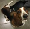 drinkeroftea: Basil (smartdog)