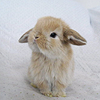 coffeeontherocks: Icon of a bunny (Stock - Bunny)