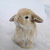 coffeeontherocks: Icon of a bunny (Stock - Bunny)