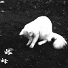 lapinlunaire: white street cat and white flowers (Default)