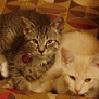 dodger_sister: (animals)