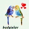 budgie_luv: (two budgies)