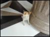 shelami: (temple, cute, 2017, asia, summer, dog) (Default)