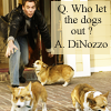 "fueschgast: Tony with Ducky's mom's corgis, text reads ""Q: Who let the dogs out? A: DiNozzo"". (NCIS)"