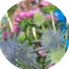 jdp23: (shy avatar) (Default)