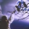 meganbmoore: (storyteller: ravens)