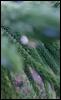 dyn125: (photography, plant)