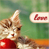 why_me_why_not: (lovekitty)
