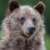 alpinebear: (fluffy)