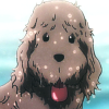 icicle33: (wet makkachin by annabeth_roses)