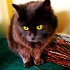 jenni_blog: (cats-fluffy)