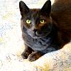 jenni_blog: (cats-shorty)