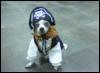 fashionista_35: (Pirate Pup)