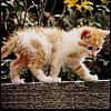 galen_erso: (Cats -- Kyber)