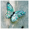 eleventyone: (blue butterfly [pretty_pixels DW])