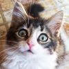 kiss_of_rage: (kitty)
