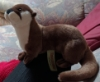 hilarita: a picture of my plush Asian short-clawed otter, Ching Shi (Ching Zhi)