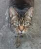mee_eep: Ratbag (cat)