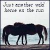 pferde: (Default)