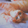 recessional: an orange tabby kitten (writing; things get better)