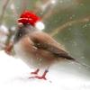 shpilkes: (Christmas2)