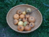 corvideye: (fruitful)