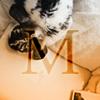 metamorprose: a rabbit investigating a piece of paper with an 'M' across it (metamorprosem) (Default)