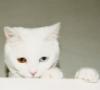 aventria: (Cat Icon)
