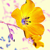 lizbennefeld: photo, color manipulated, of blue wild flax flower (art)