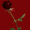 jdotmi: (Blood Rose)