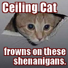 "next_to_normal: Cat poking its head out of the ceiling with text ""Ceiling Cat frowns on these shenanigans"" (ceiling cat)"