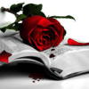 fahrenheit: Pic of a red rose on top of a book (Default)