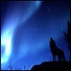 akaibara: (wolf)