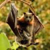 merryeccentricities: (bat)