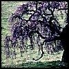 latino_menace: (Tree)
