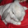 easybeinggreene: (Sleepy)