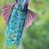 caudipteryx: (Default)