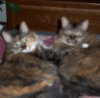 varkelton: (Kitty Hugs)
