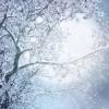 shi_koi: (snowtree)