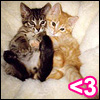 angelina: Kitten love (<3)