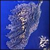 xamotomax: (Corsica)