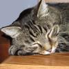 tarotgal: (Maxwell Sleeping)