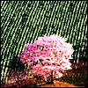 elaine_marie: (misc - pink tree)