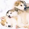 weaselett: (misc - puppy pile)