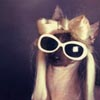 sengis: a small dog dressed as lady gaga, wearing white sunglasses and a blonde wig. from photographer Jesse Friedin's series (Default)